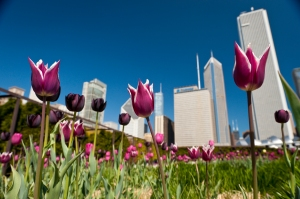 Chicago Spring April Activities